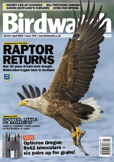 Birdwatch Magazine Pdf