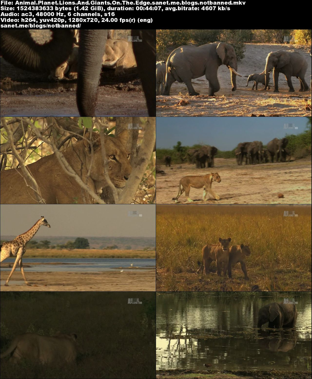 Download Discovery Channel - Animal Planet: Lions and Giants (2015