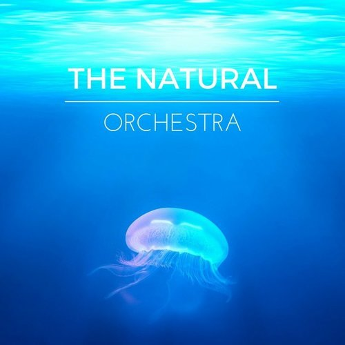 Nature Sounds & Yoga Tribe - The Natural Orchestra