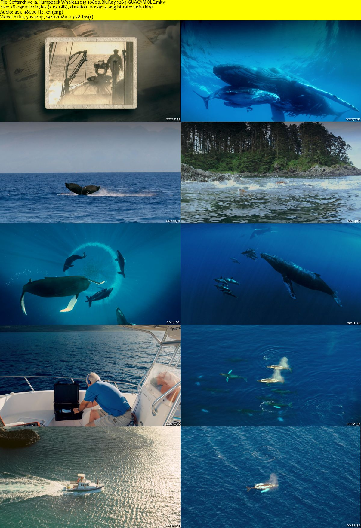 an in depth look at the whale