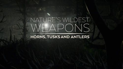 BBC Natural World 2017 Natures Wildest Weapons 720p HDTV x264 AAC MVGroup