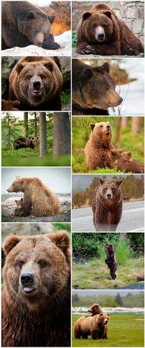 Grizzly set 1 - 11UHQ JPEG
