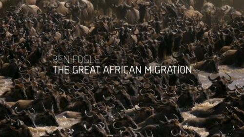 Ch5 The Great African Migration 2017 1of4 720p HDTV x264 AAC MVGroup