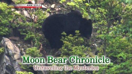 NHK Moon Bear Chronicle Unraveling the Mysteries 2017 720p HDTV x264 AAC MVGroup