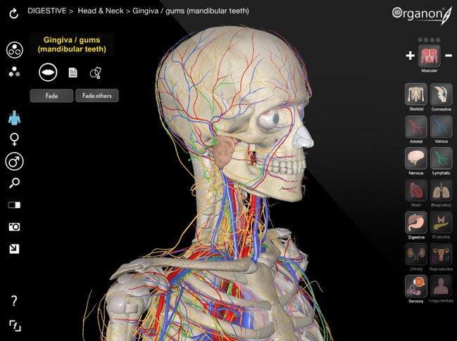 3D Organon Anatomy 3.0.0 Portable