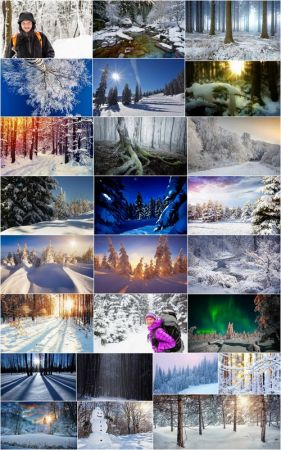 Winter forest snow tree sunrise snowfall 25 HQ Jpeg
