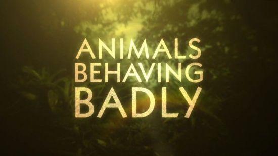 BBC - Animals Behaving Badly Series 1 (2018)-720p HDTV x264 AAC MVGroup
