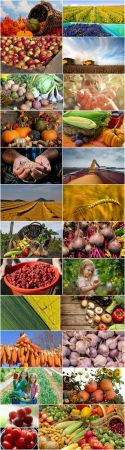 Harvest field agriculture vegetables fruits agriculturist autumn 25 HQ Jpeg