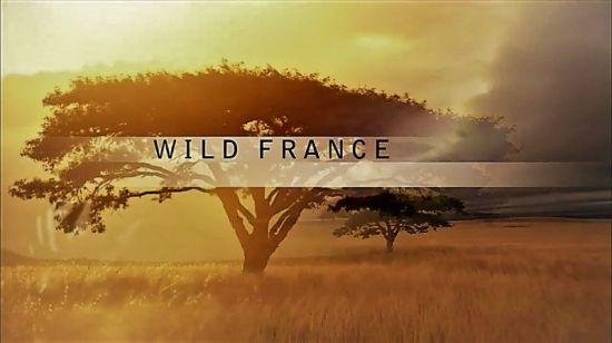 PBS Nature: - Wild France (2015) - 720p HDTV x264 AAC MVGroup