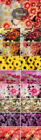 Flowers Lr Presets 2941585 - Lightroom Presets.
