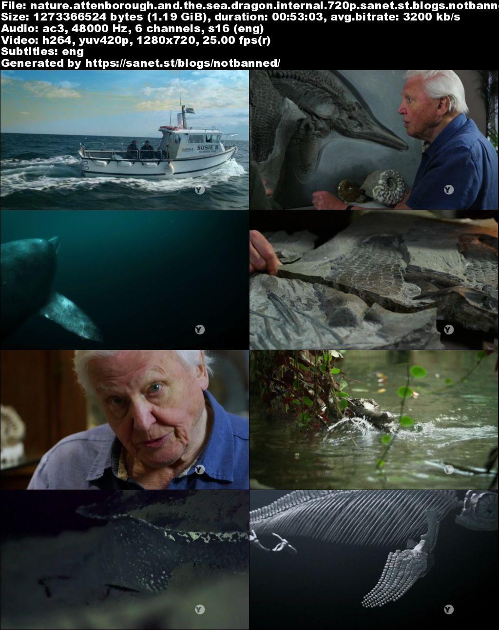 Download Pbs Nature Attenborough And The Sea Dragon 2018