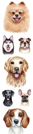 Popular dog of different breed watercolor illustrations
