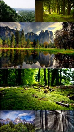 Wood landscapes (Part 71)