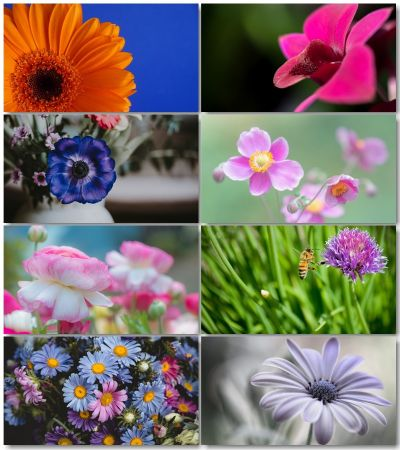 Beautiful Flowers Pictures (Pack 3)