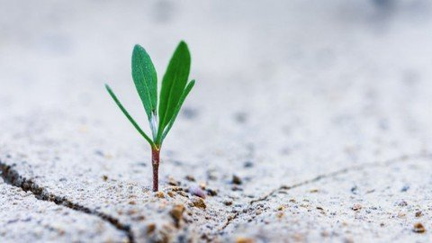 6 Traits of Executive You  Resilience