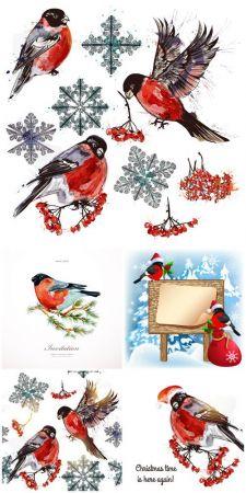 Winter, birds, bullfinches, vector