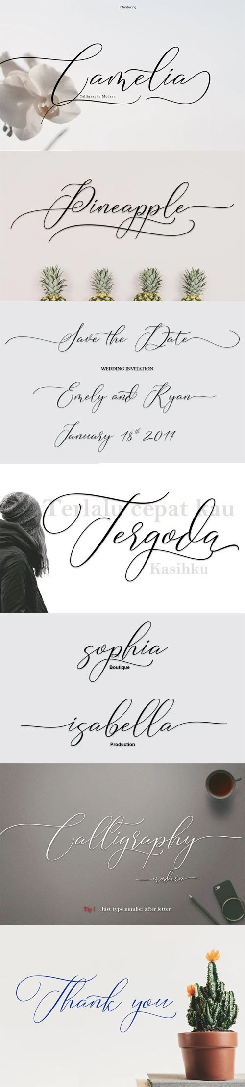 Camelia Calligraphy - Modern Script Typeface