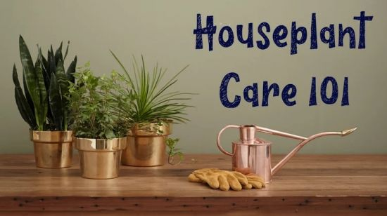 Houseplant Care 101 Tips for the New Plant Parent
