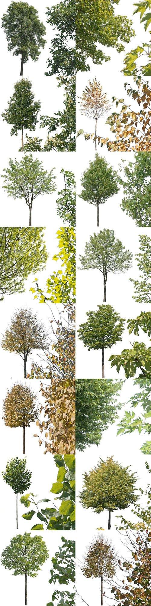 16 Cutout Trees - Transparent Stock Images